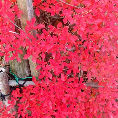紅葉がとてもきれいな季節です