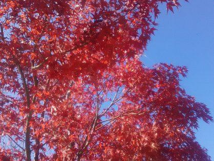秋深まっておりますね