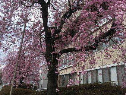 あちらこちらで春の色